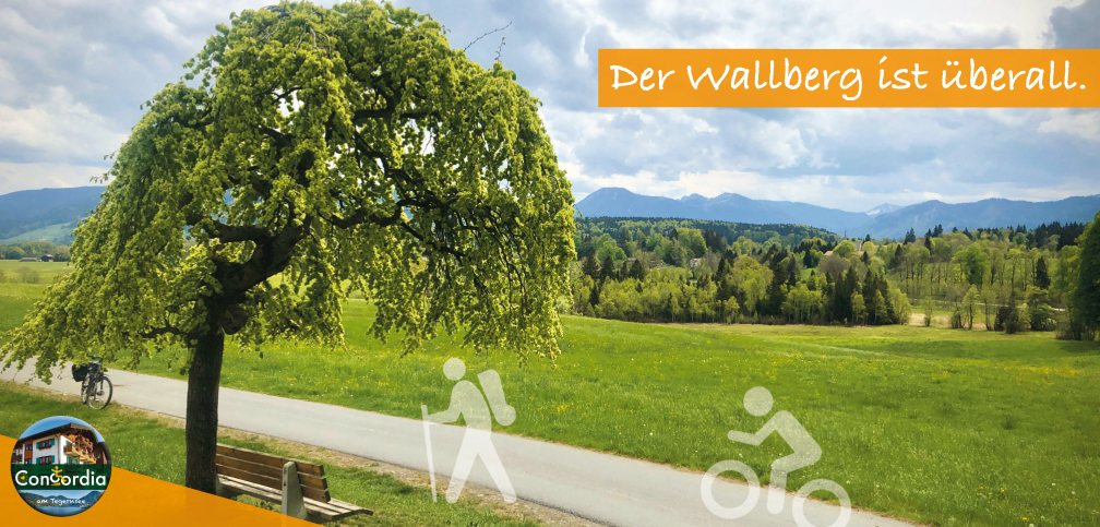 Ulme_Wallberg